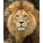 NLC Team Lion