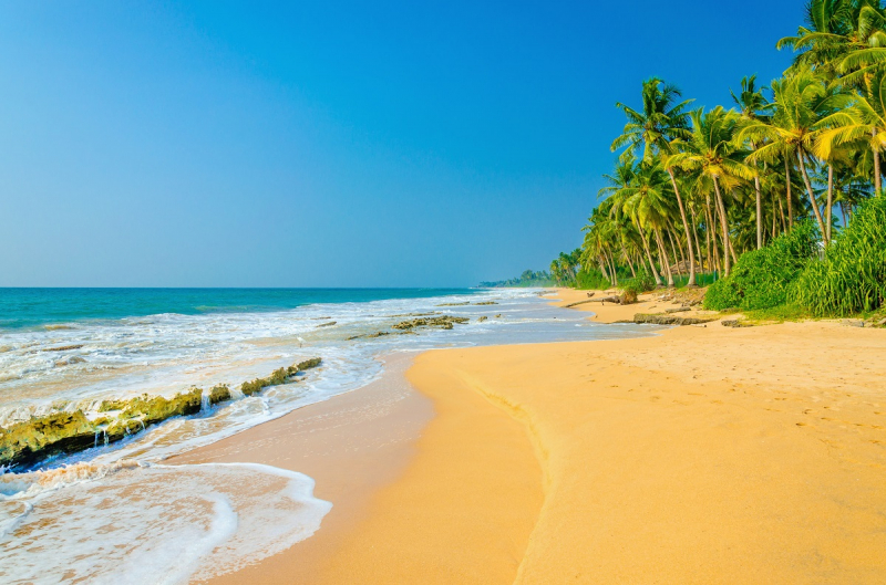 Baton Relay 7: Caribbean A
