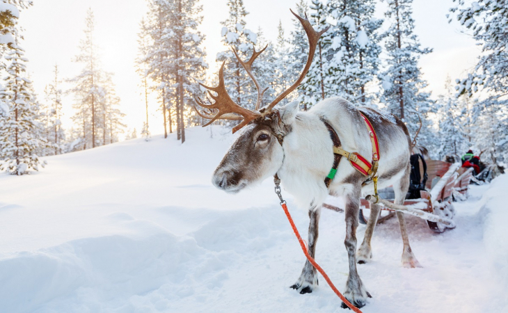 Queensgate Lapland Challenge