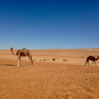 The Fluffy Camels :)