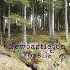 Newcastleton Fossils