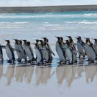 Penguins' Pilgrimage