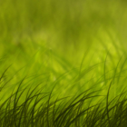 Tender Grass