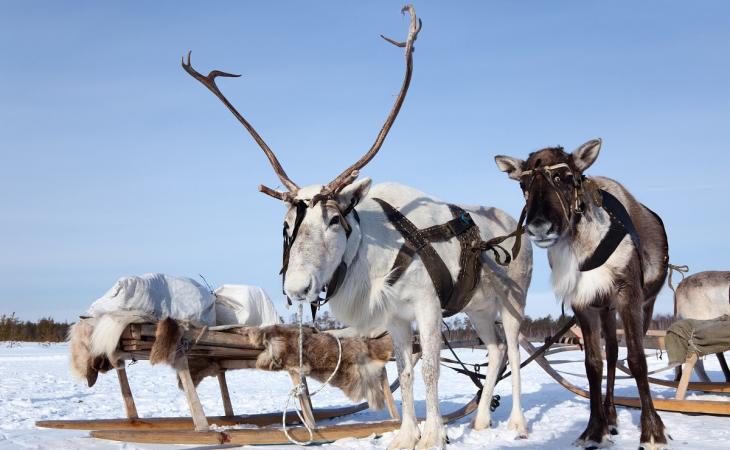 St Joseph's to Lapland