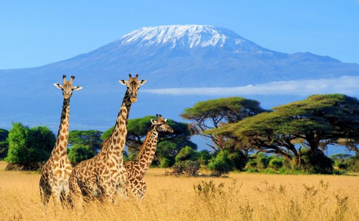 Around Africa